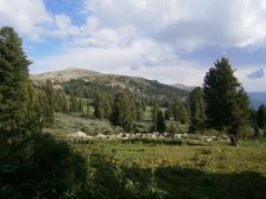Алтае-Чемал